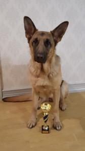 Årets lydnadshund 2015